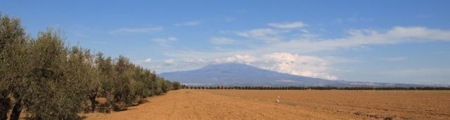 シチリアエトナ山と麓の有機菜園の写真