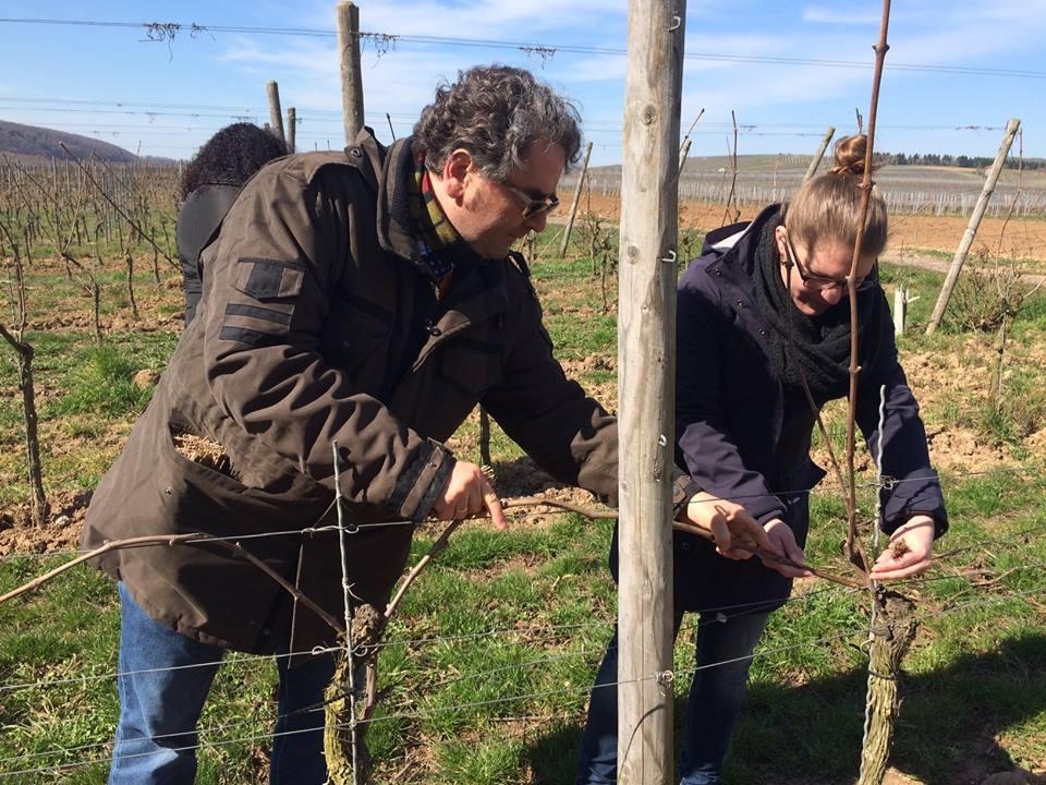 有機葡萄畑で男性1人と女性1人が葡萄のつるをつけている写真