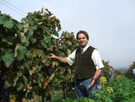 有機葡萄農園に立つ生産者の写真