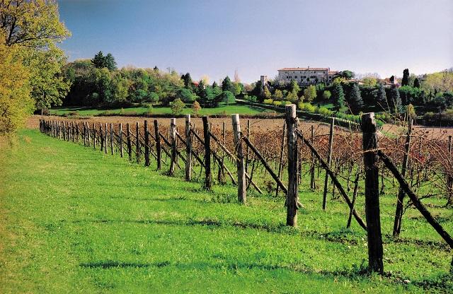 オーガニックワイン畑