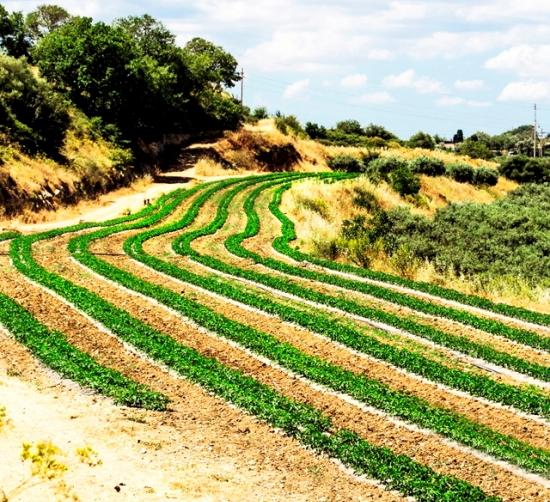 青空の下に広がる農園の写真