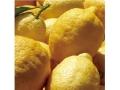 レモンソルベ