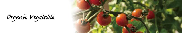 有機トマトの写真